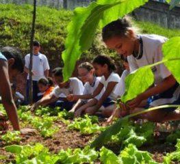 Lugares fixos para produtos da economia solidária e agricultura familiar e outros projetos aprovados pelo PT na CCJ